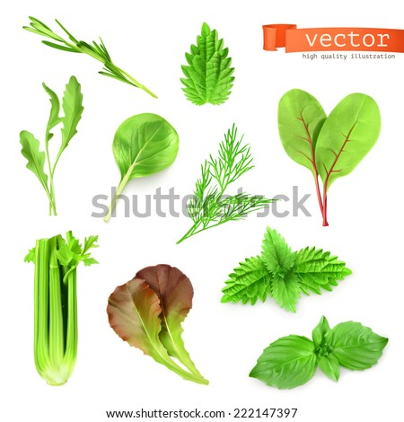Herbs set, vector illustration - stock vector