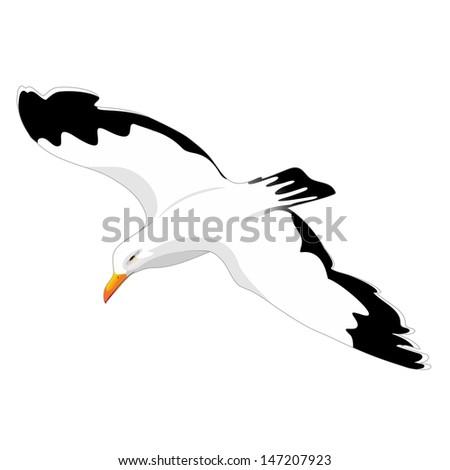 Herring Gull Seagull Flight - stock vector