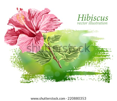Hibiscus flower on green background. Vector drawing / Eps10 - stock vector