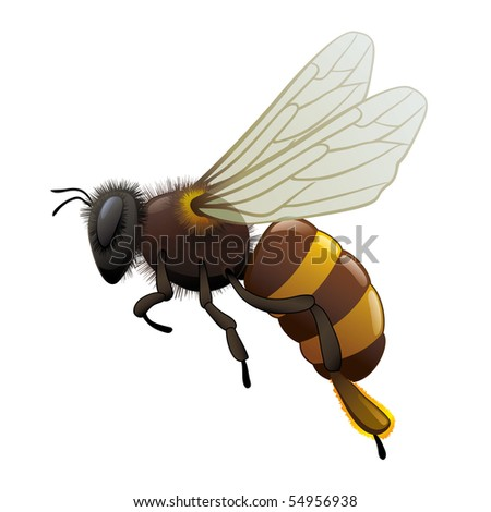 """honey bee wasp. """"Full compatible. Created with gradients. Named in layers"""" - stock vector"""