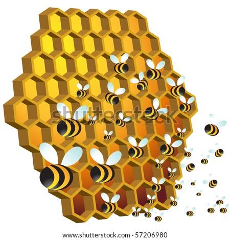 Honey Bees - stock vector