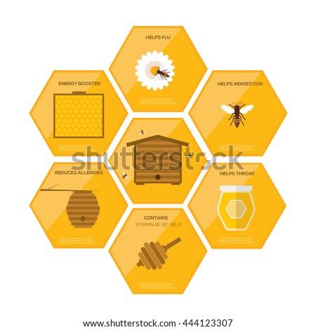 Honey infographics . Flat design vector concept illustration organic natural honey bee   - stock vector