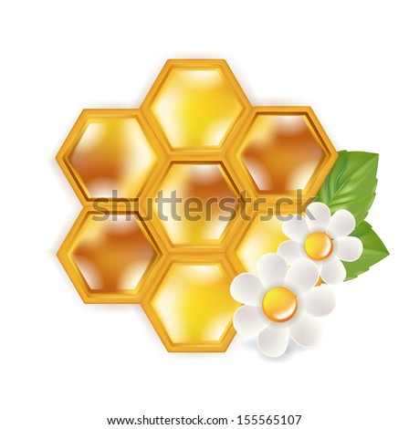 honeycomb with flowers isolated on white background - stock vector