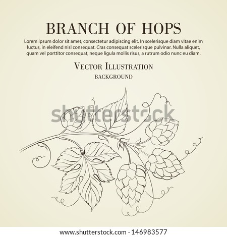 Hop with leafs isolated on biege. Vector illustration. - stock vector