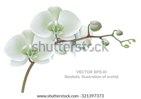 Horizontal photo realistic illustration of white orchid. - stock vector