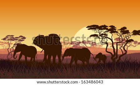 Horizontal vector illustration of wild elephants in African sunset savanna with trees. - stock vector