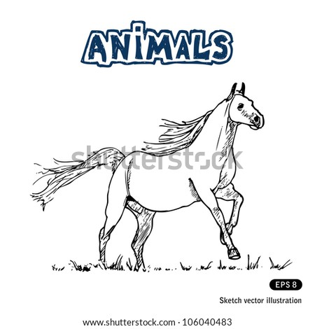 Horse. Hand drawn sketch illustration isolated on white background - stock vector