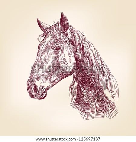 horse hand drawn vector llustration realistic sketch - stock vector