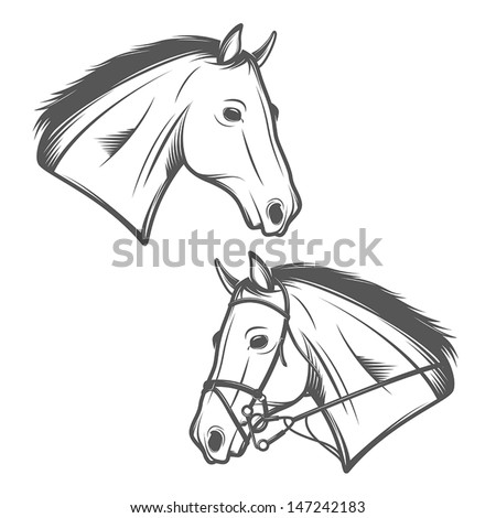 Horse head isolated on white background - stock vector