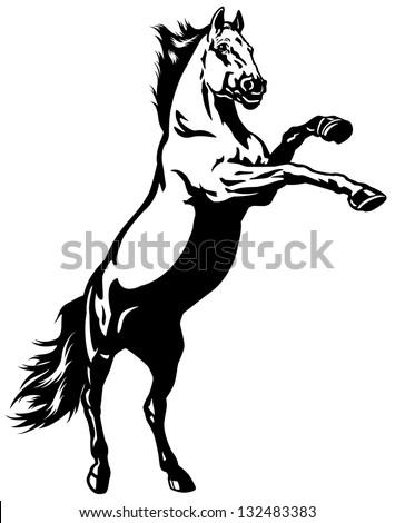 Rearing Horse Logo