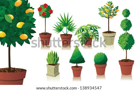 Houseplant and topiary collection. EPS 10 vector, grouped for easy editing. No open shapes or paths, - stock vector