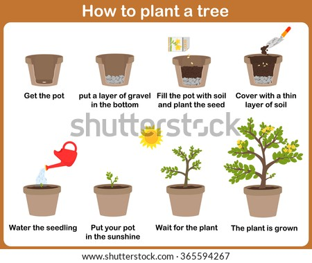 How to write an sop for a plant