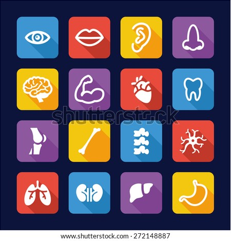 Human Anatomy Icons Flat Design - stock vector