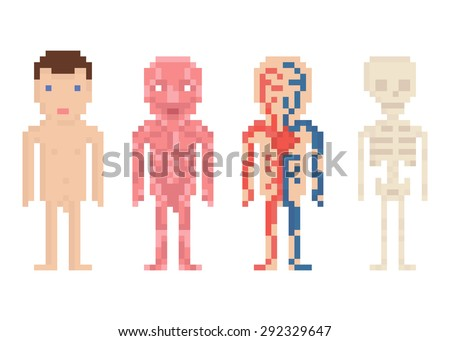 Human Body Anatomy - nude body, muscle, blood circle and sceleton, pixel art illustration - stock vector