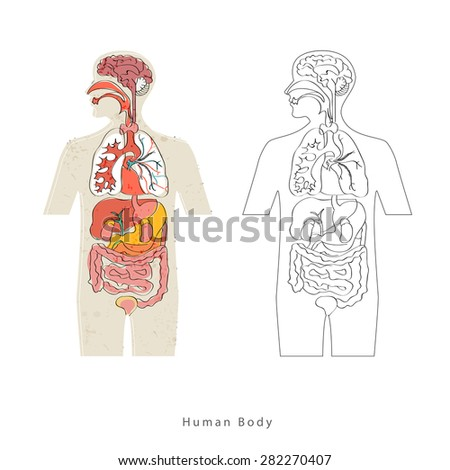 Human Body Anatomy vector - stock vector