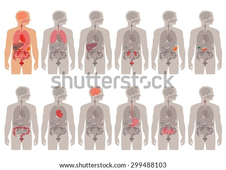human body anatomy, vector medical organs system,  - stock vector