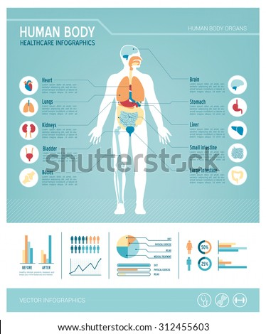 Human body health care infographics, with medical icons, organs, charts, diagarms and copy space - stock vector