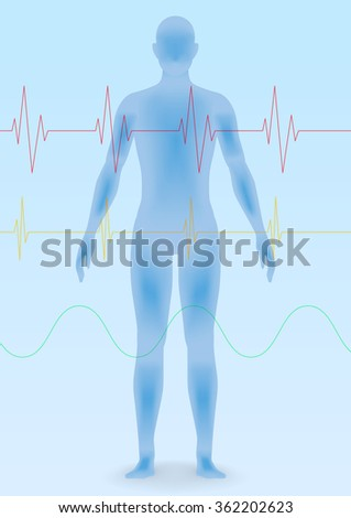 human body silhouette and vital sign waveforms, vector illustration - stock vector