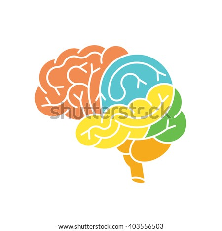Human brain anatomy structure. Human brain anatomy illustration. Vector human brain anatomy in flat style, easy recolor. Brain icon. Structure of human brain. Vector brain logo. - stock vector