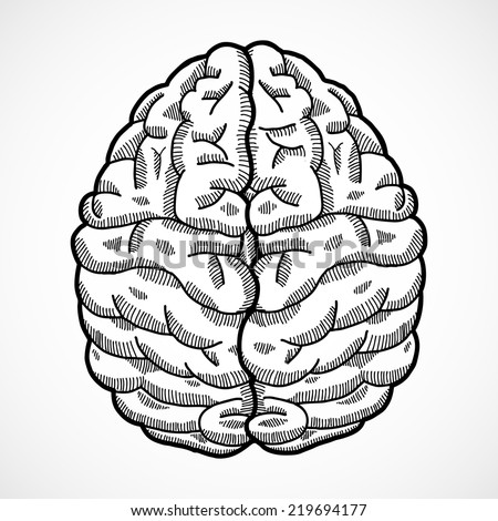 Human brain cortex top view sketch isolated on white background vector illustration - stock vector