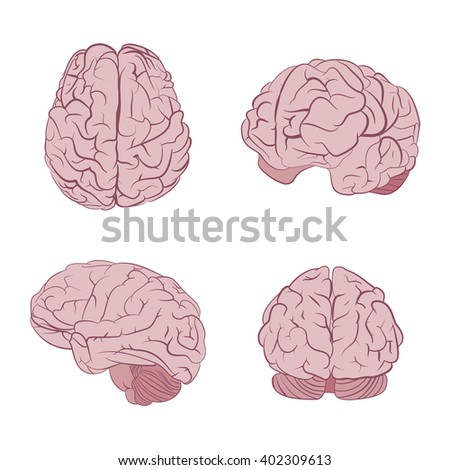 Human brain four views. Top, frontal, side, three-quarter. Flat brains vector icons eps10. - stock vector