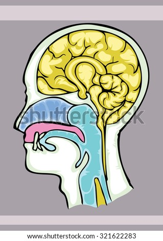 Human brain structure, cartoon hand draw illustration, ink on paper based outline - stock vector