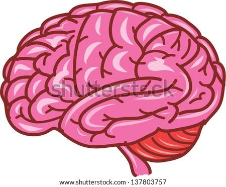 human brain vector - stock vector