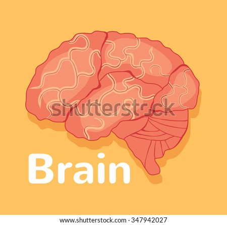 Human brain. Vector flat illustration - stock vector