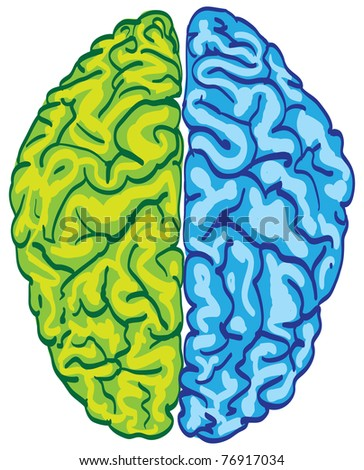 human color brain isolated - illustration - stock vector