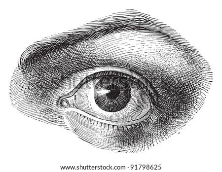 Human eye - Vintage illustration from Meyers Konversations-Lexikon 1897 - stock vector