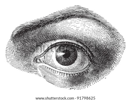 Human eye - Vintage illustration / illustration from Meyers Konversations-Lexikon 1897 - stock vector