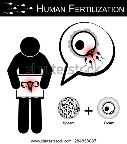 Human Fertilization ( Stick woman hold monitor screen and show imaging of uterus ) , Fertility concept ( sperm cells race to fertilize with ovum ) ( Woman Health Care ) - stock vector