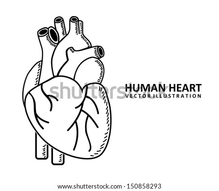 Human Heart Vector Black And White Human Heart Design Over White