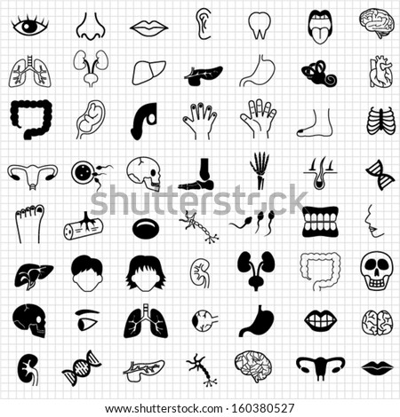 Human organ icons - stock vector