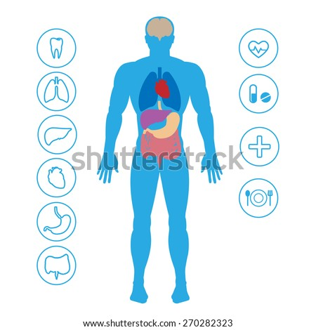 Human organs and medical icons - stock vector