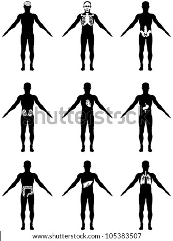 human organs in body icons - stock vector