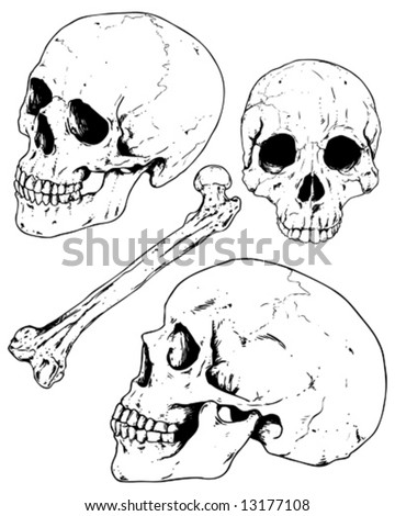 human skulls and bone - stock vector