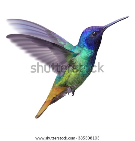 Hummingbird - Golden tailed sapphire. Hand drawn vector illustration of a flying Golden tailed sapphire hummingbird with colorful glossy plumage on transparent background.  - stock vector