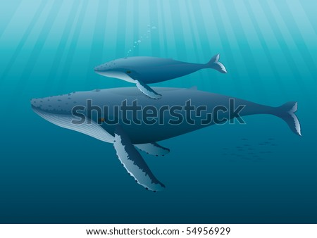"""Humpback Whale mother with young.  """"Full compatible. Created with gradients. Named in layers."""" - stock vector"""