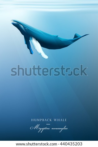 Humpback whale swimming under the blue ocean surface vector illustration - stock vector