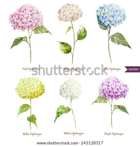 hydrangea, watercolor, flowers, cards, set - stock vector