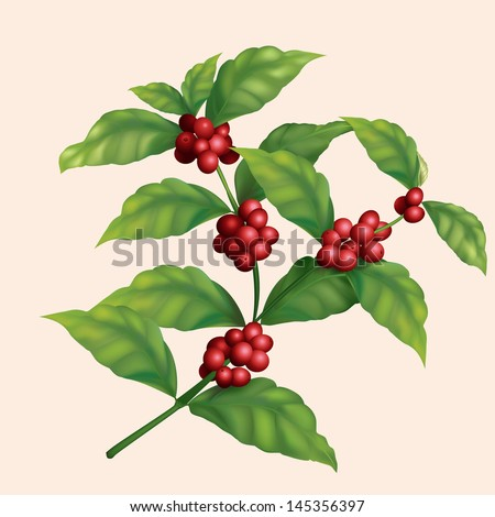 icon coffee tree branch with berries. - stock vector