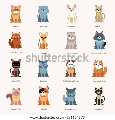 icons cats. Breed cats. Cats in a flat style. Large Icons breeds of cats - stock vector