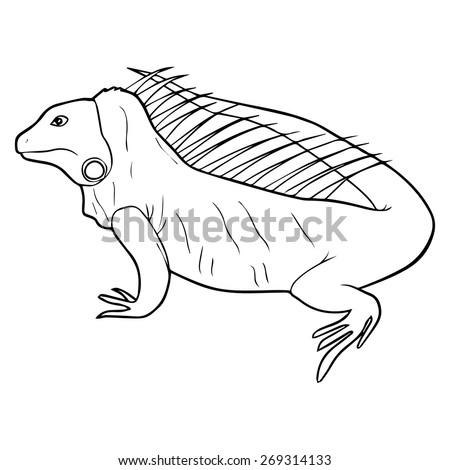 Iguana illustration outline - stock vector