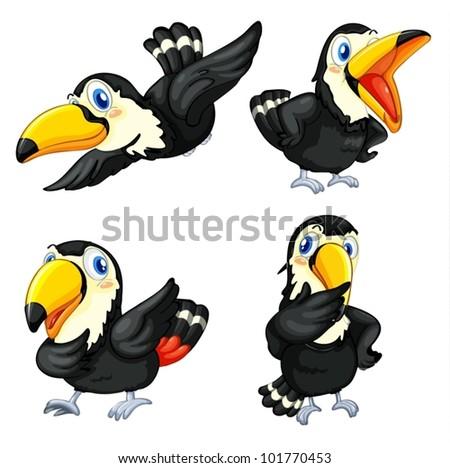 Illustraiton of toucan birds on white - stock vector