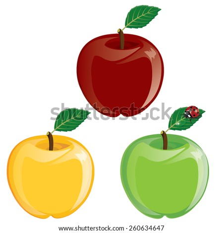 illustration. Apple. green, yellow , red on white background. - stock vector