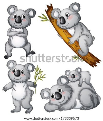 Illustration of a group of koalas on a white background - stock vector