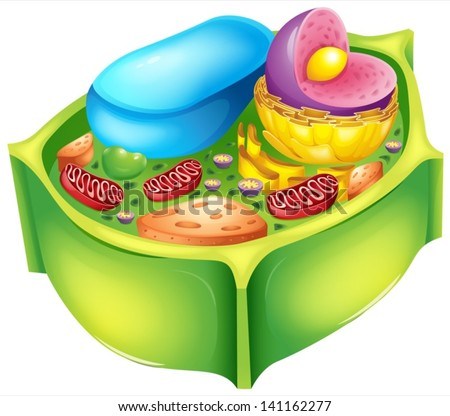 Illustration of a plant cell - stock vector