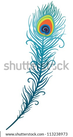 illustration of beautiful peacock feather on a white background (vector) - stock vector