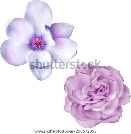 illustration of blue purple rose and magnolia flower isolated on white background - stock vector
